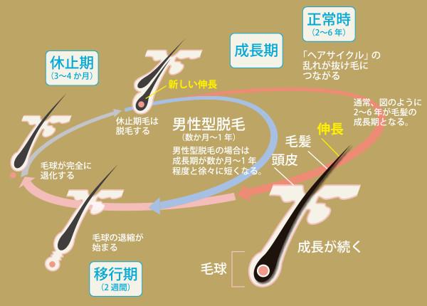 ヘアサイクル画像 | 進化する育毛技術